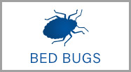 bed bud control