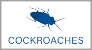 roach control